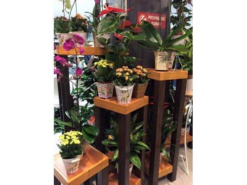 flores y plantas 1