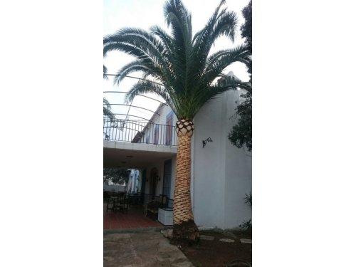 palmeros general