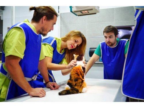 Clínica Veterinaria Silla