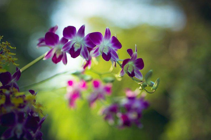 Mantenimiento de Jardines Almena