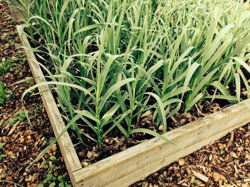 Jardinería Rivendel