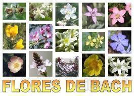 Descuento del 50 % en flores de Bach online. En vez de 25 € la primera sesión, sólo 12,50.