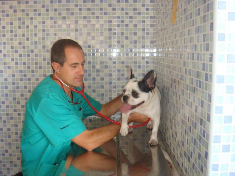 Clínica Veterinaria Echevarría