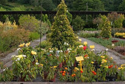 Comprar producci n propia de arbustos con feras y rboles for Viveros arboles ornamentales
