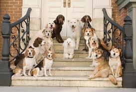 Nuestros técnicos en modificación de conducta y adiestradores  y educadores caninos procederán a valorar ti caso de forma personalizada