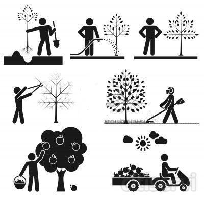 Servicios de poda, desbrozado, limpieza y mantenimiento de jardines por horas.