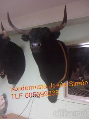 por la compra de dos cabezas de toros se lleva tres,oferta especial