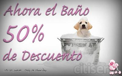 Todos los jueves hacemos un descuento del 50% en el servicio de baño.