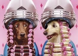 ¡¡Bajamos los precios!!  Oferta LOWCOST permanente en peluquería canina    Queremos ofrecerte nuestro nuevo servicio de peluquería canina adaptado a estos tiempos de crisis.  Baño razas pequeñas y  medianas : 19,99 €