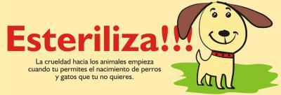 Queremos ofreceros nuestra campaña de esterilización para perros macho lowcost por tan solo 110 €  Cita previa en: - sadveterinarios@gmail.com - 652290621